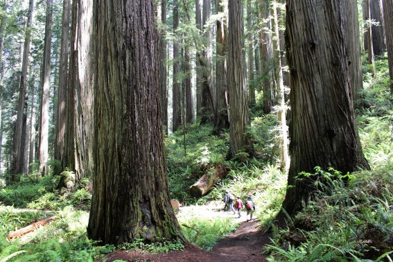 CA-Redwoods-Hike-Giant-Michelle-McCoy