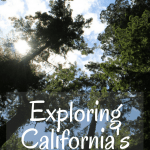 Jedediah Smith State Park- A Redwoods Adventure for Families in California 1