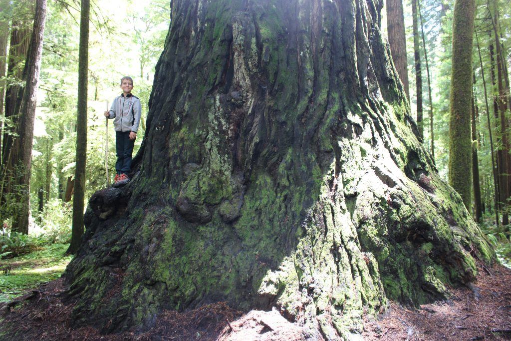 Jedediah-Smith-Redwoods-with-Kids-by-Michelle-McCoy Redwood National Park with kids