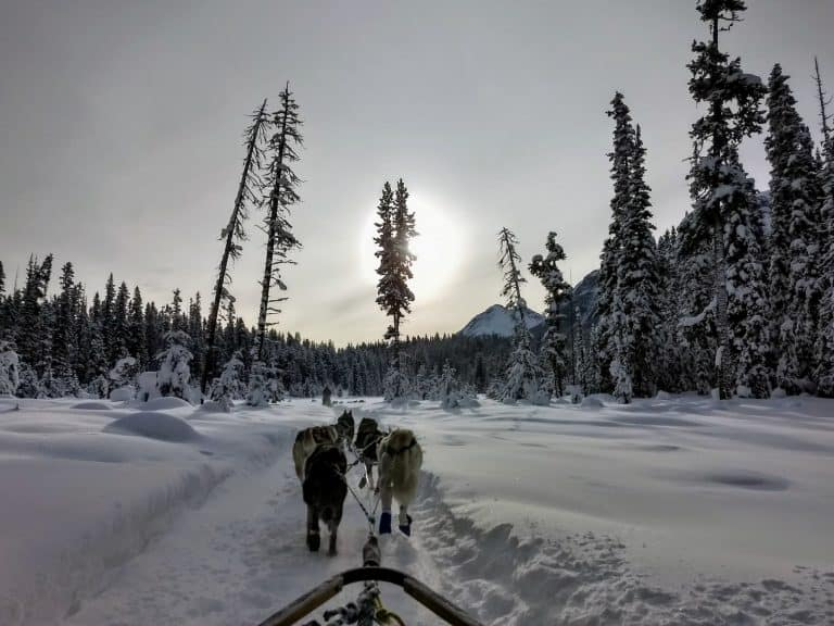 kingmik-dogsled tour in Banff Banff in Winter