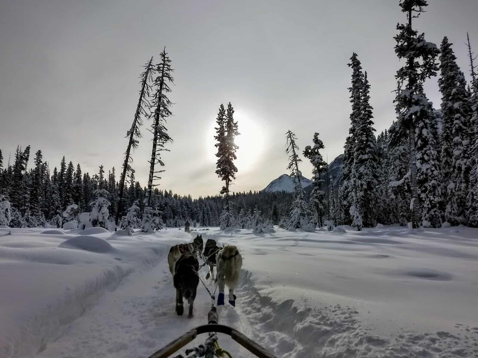 kingmik-dogsled tour in Banff Banff in Winter