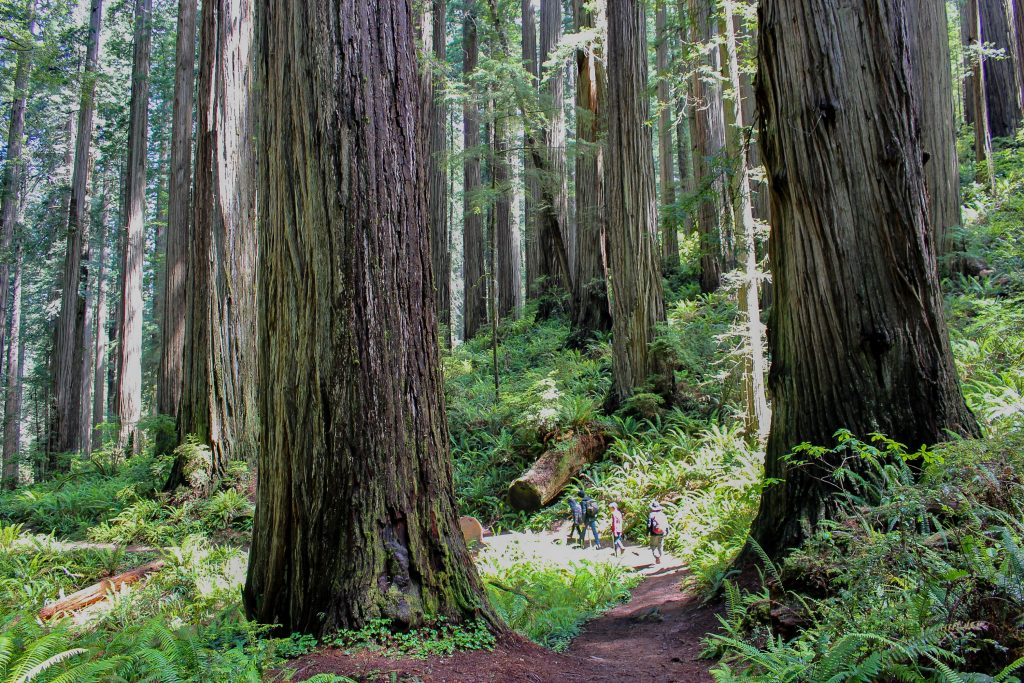 Redwood National Park with kids