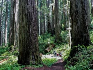 Redwoods-Jedediah-Smith-State-Park-with-kids-by-Michelle-McCoy