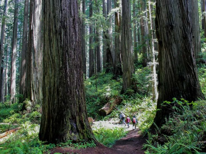 Jedediah Smith State Park- A Redwoods Adventure for Families in California