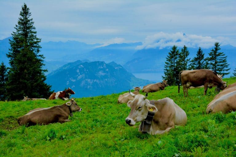 Switzerland travel Mount Rigi