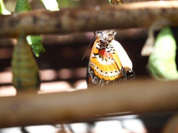Butterfly Garden in Siem Reap, Cambodia