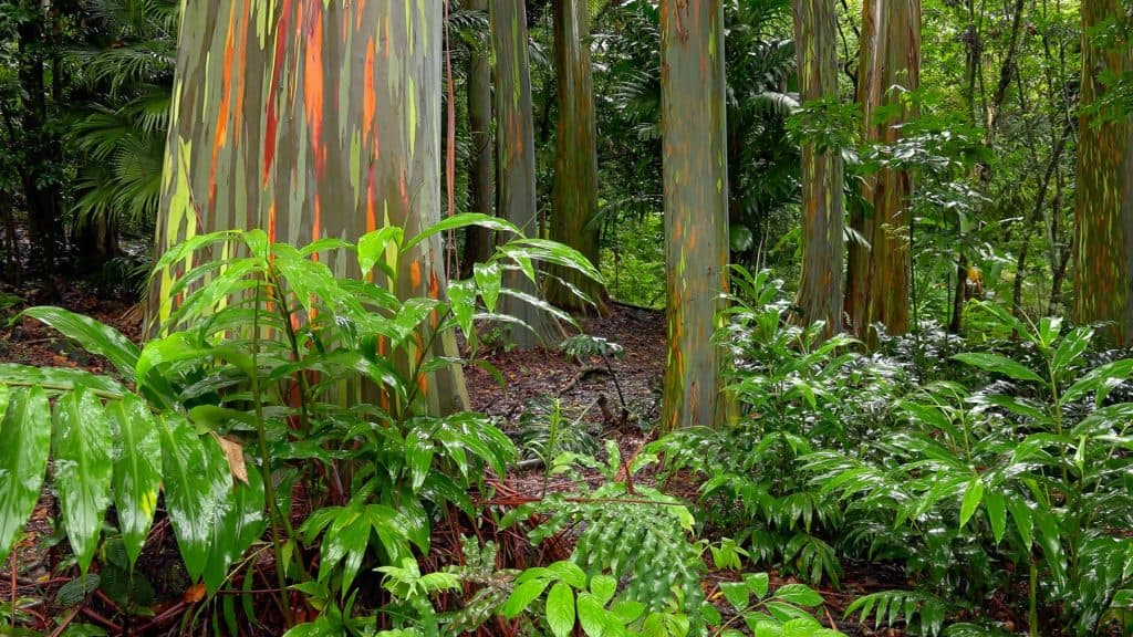 things to do in Kauai include visiting the Kehua Arboretum
