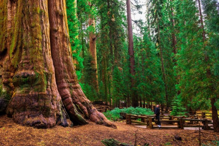 California National Parks Road Trip begins at Sequoia National Park