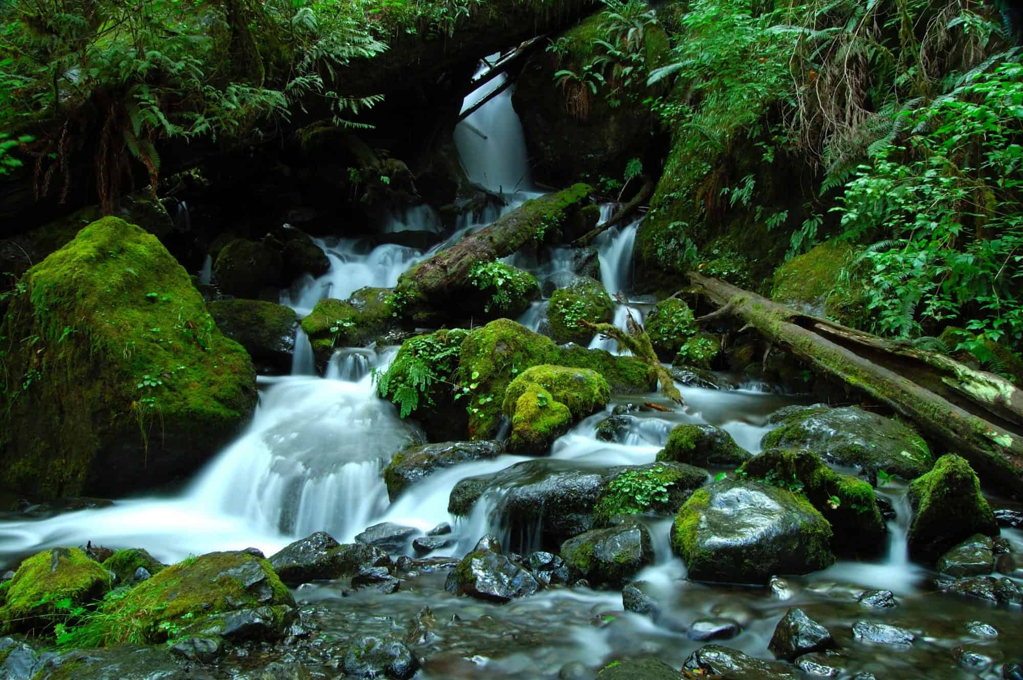 The Best Things to do in Olympic National Park with kids