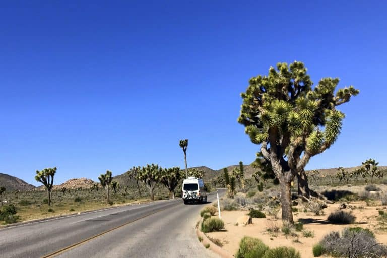 Joshua Tree National Park is a fun thigns to do in California