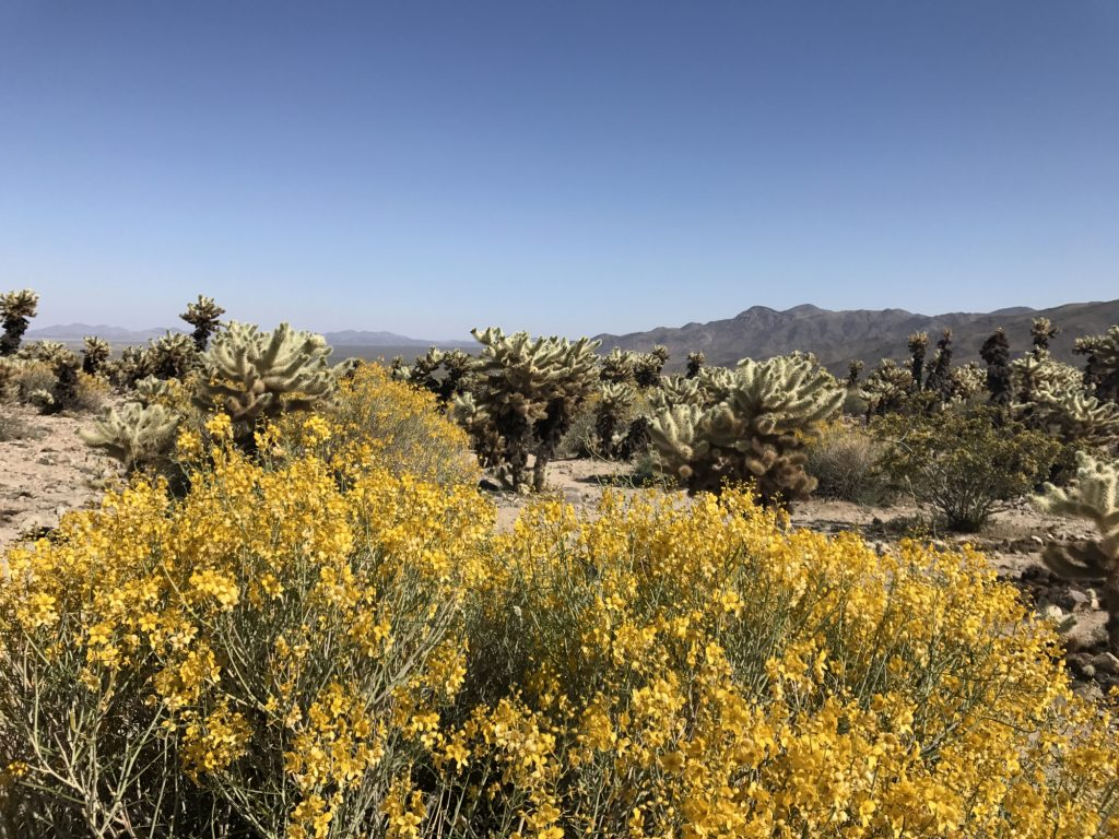 Visit Joshua Tree National Park in the spring