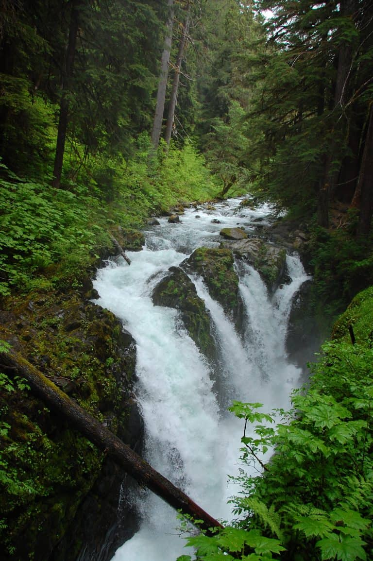 The hike to Sol Duc falls is a highlight of visiting Olympic National Park with kids.