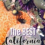 The 8 Best California Tide Pools 1