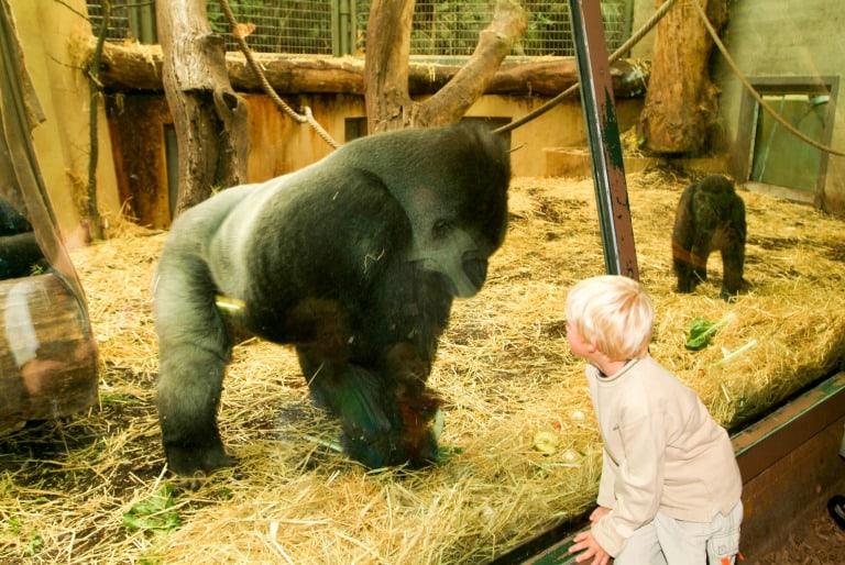 Zurich with kids zoo