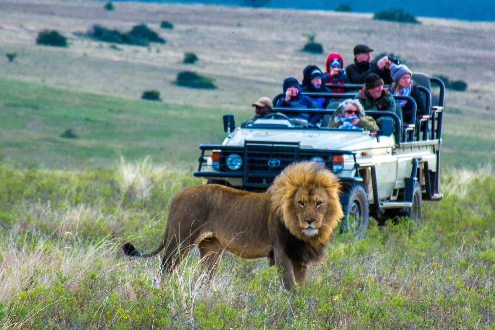 South African Safari with Kids near the Garden Route