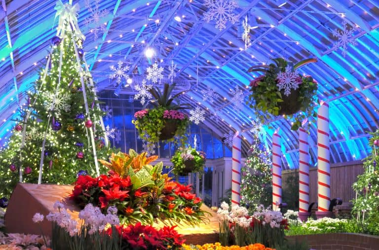 Pittsburgh Christmas events at the Phipps Conservatory