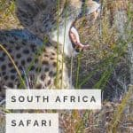 South African Safari with Kids near the Garden Route 1