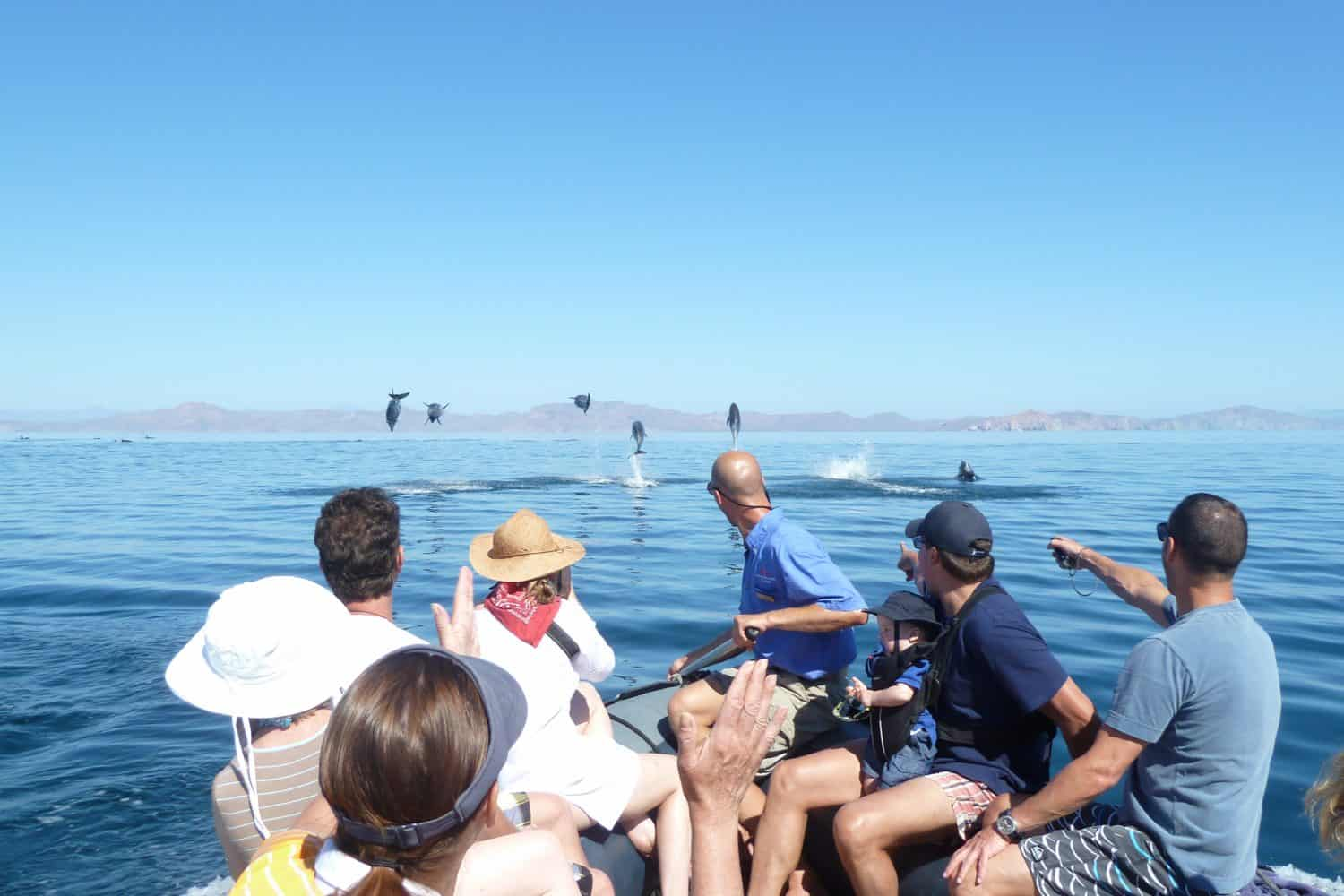 UnCruise in the Sea of Cortez - Dolphins from a skiff