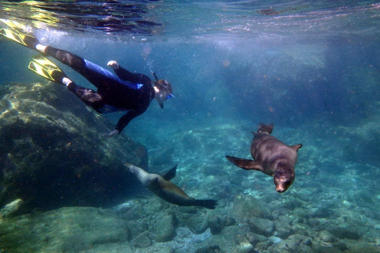 UnCruise in the Sea of Cortez - Sea Lion