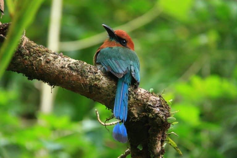 Arenal Volcano Costa Rica Wildlife