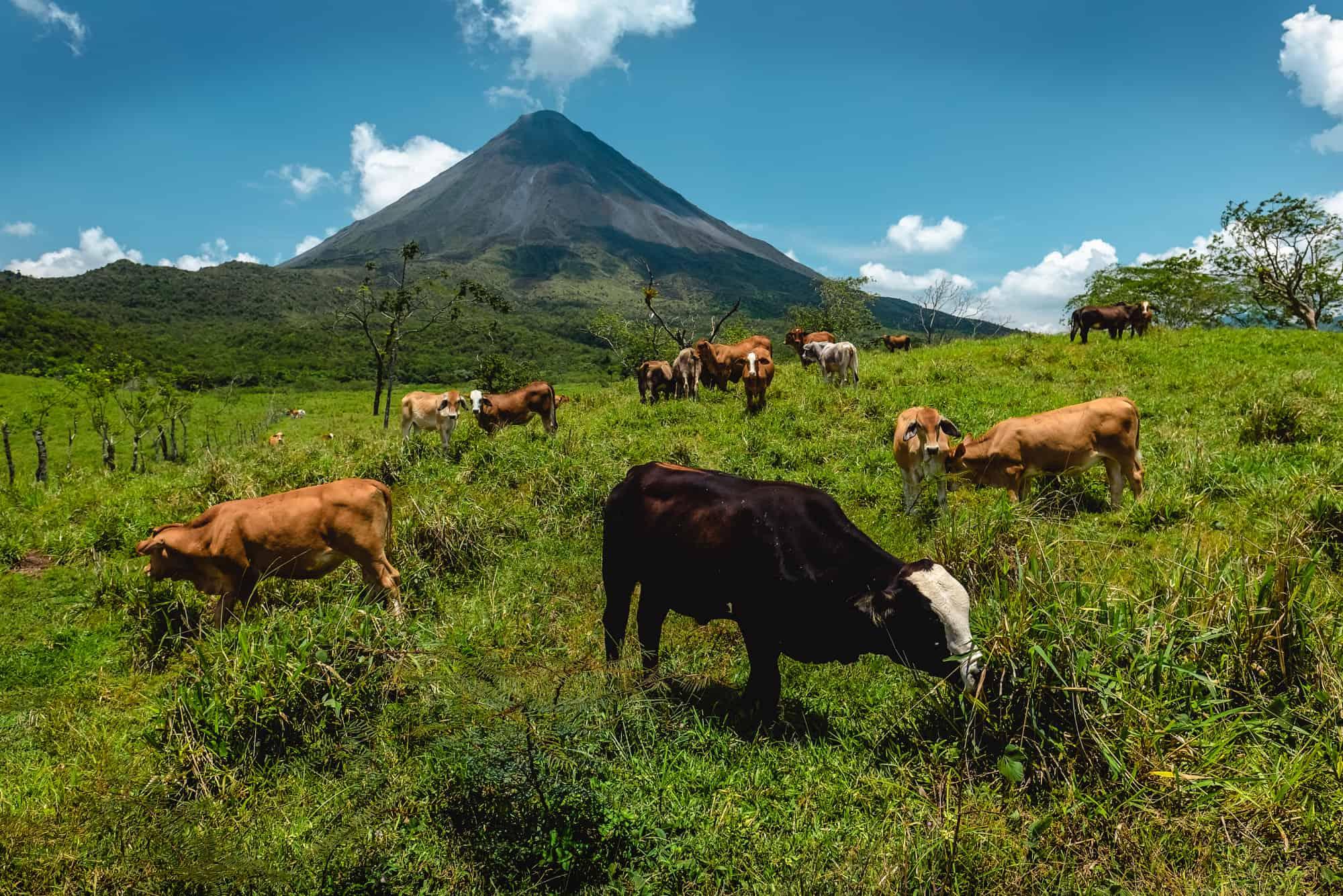 Arenal Volcano Costa Rica Farm Area