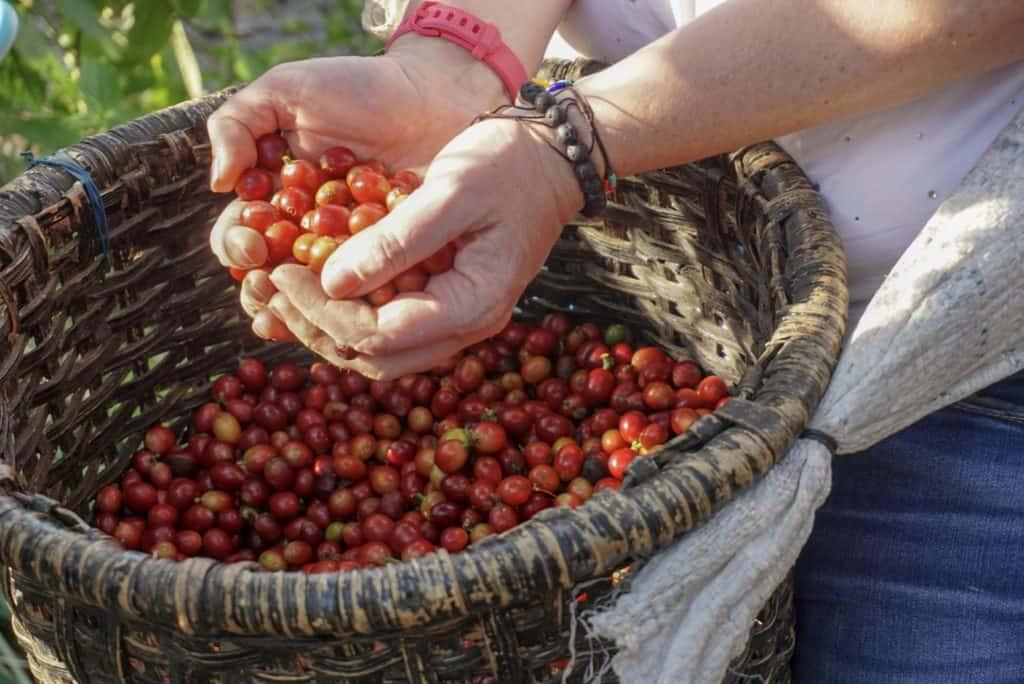 San Jose Costa Rica coffee farm