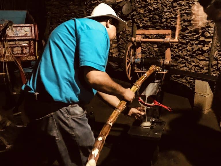 Sugarcane at Vida Campensina Farm - Arenal Volcano Costa Rica
