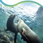 Swim Los Islotes Sea Lions La Paz Mexico