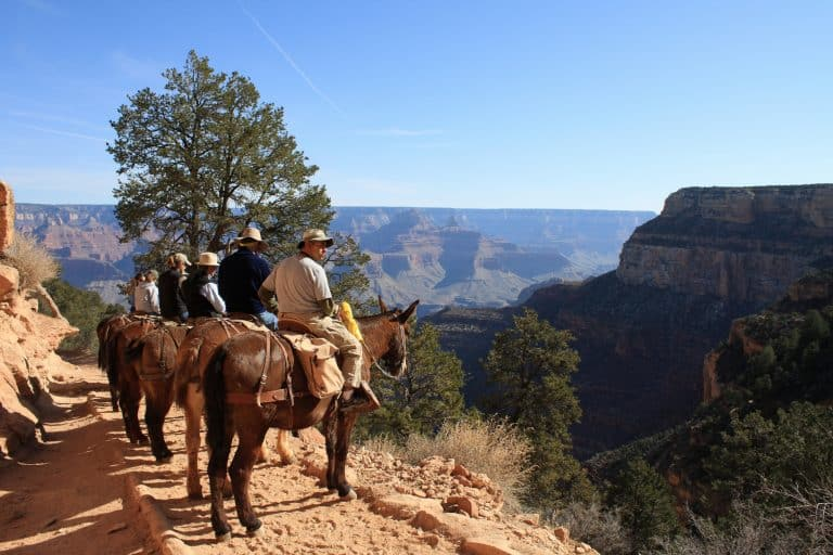 things to do in the Grand Canyon with kids mule ride