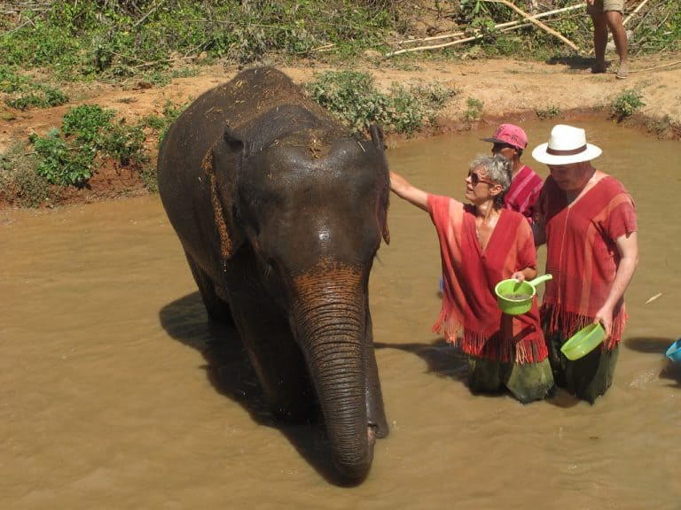 Bangkok Elephant Tour - ElephantsWorld Sanctuary