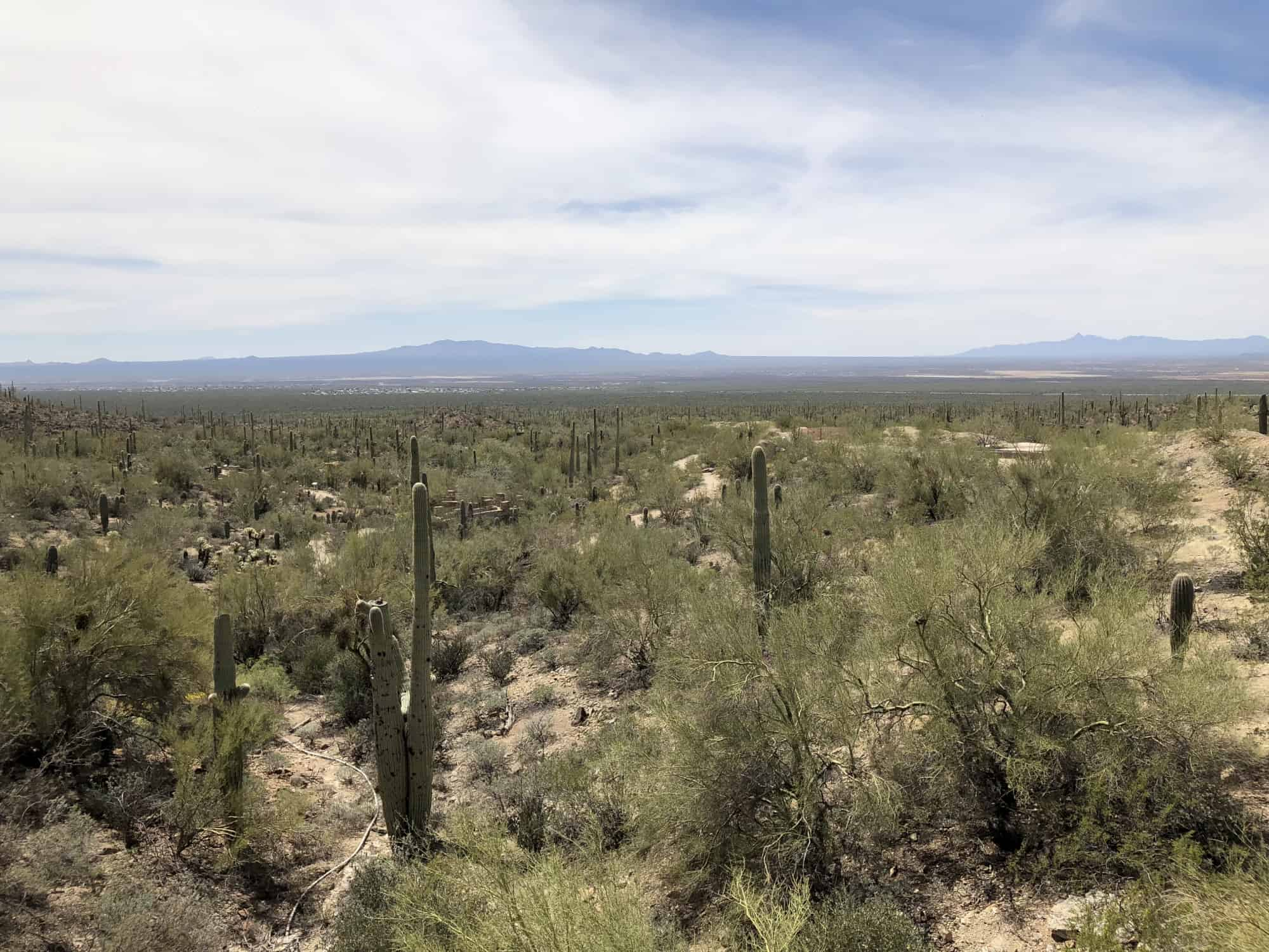 Tucson Travel Guide – A Long Weekend in Tucson with Kids