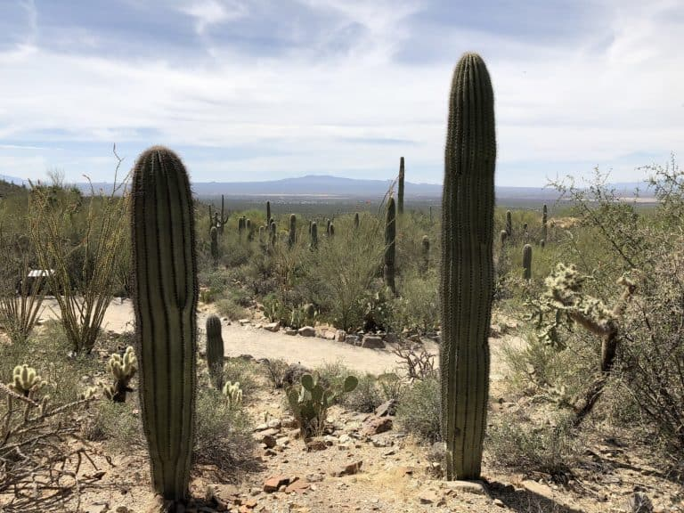 hiking trails through the Saguaro desert