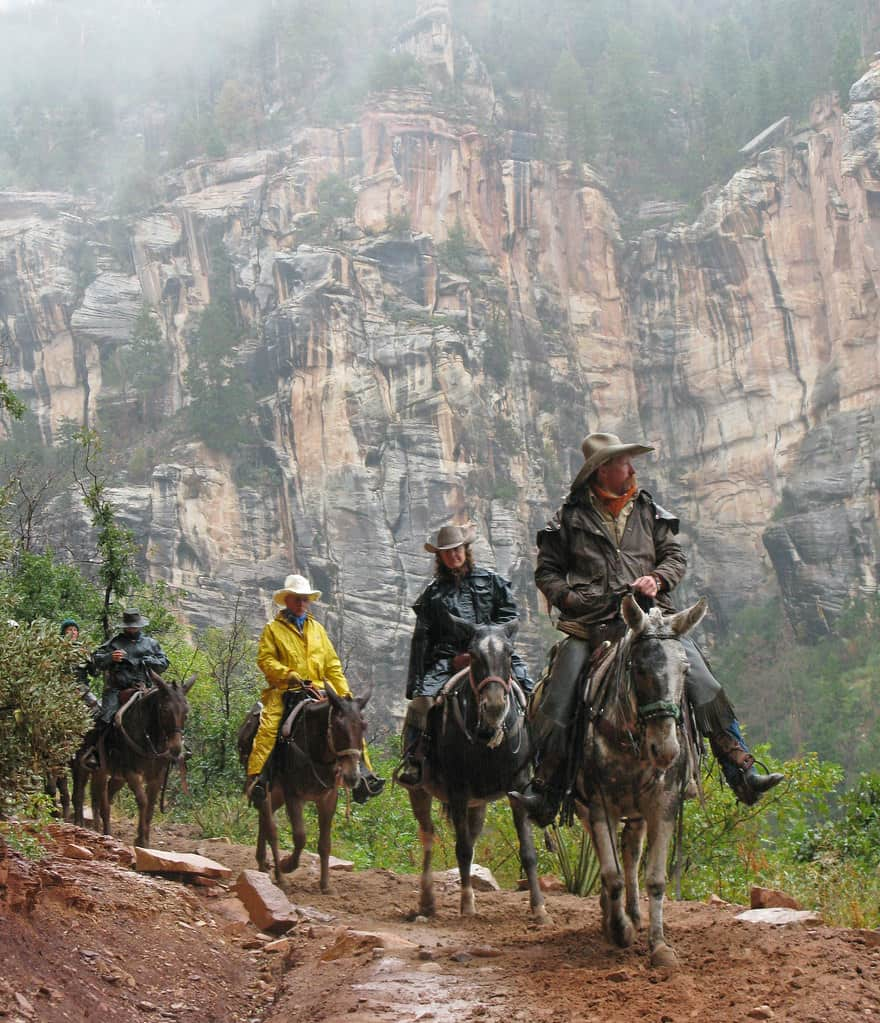 grand canyon north rim mules photo