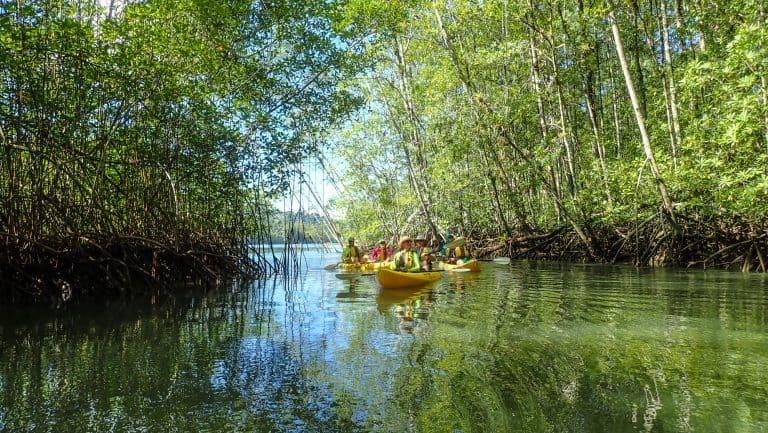 Rio Esquinas Mangrove Kayak