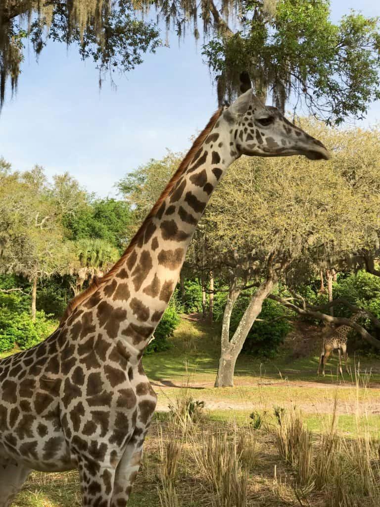 20 Best Rides at Disney World: Kilimanjaro Safaris