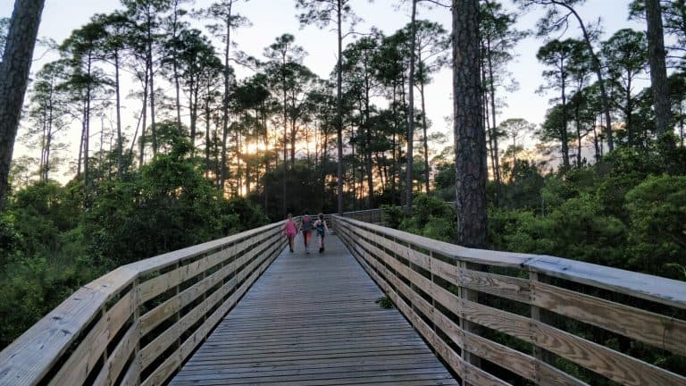 things to do in Gulf Shores Alabama Maritime Forest