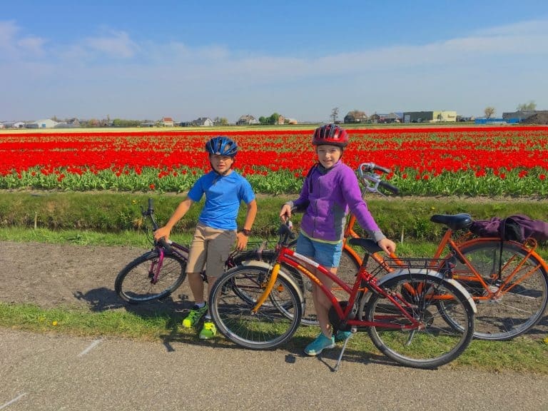 Day Trips from Amsterdam Tulip Fields Netherlands