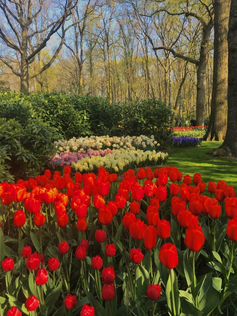 Tulips Netherlands Keukenhof