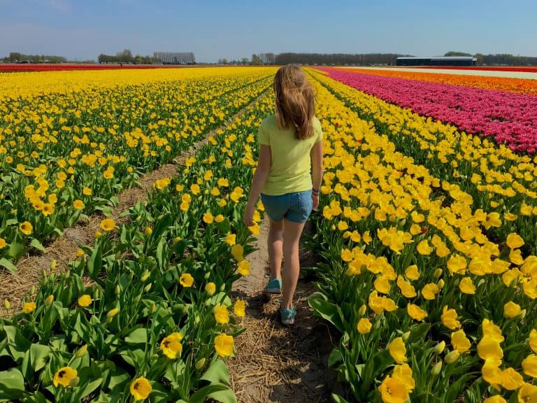 Day Trips from Amsterdam Tulips Netherlands
