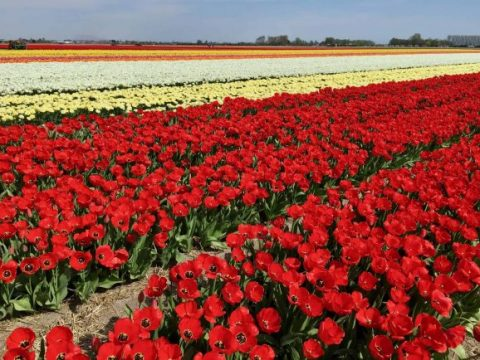 5 Amazing Day Trips from Amsterdam for Families