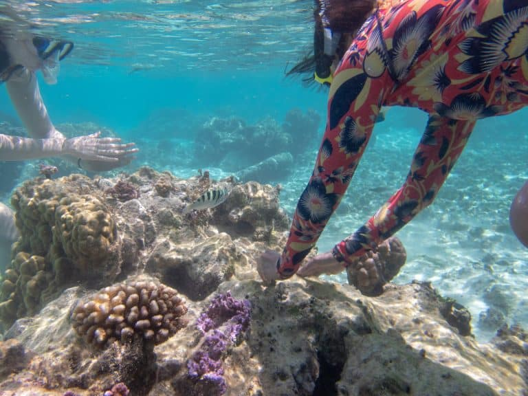 Planting coral to restore the reefs