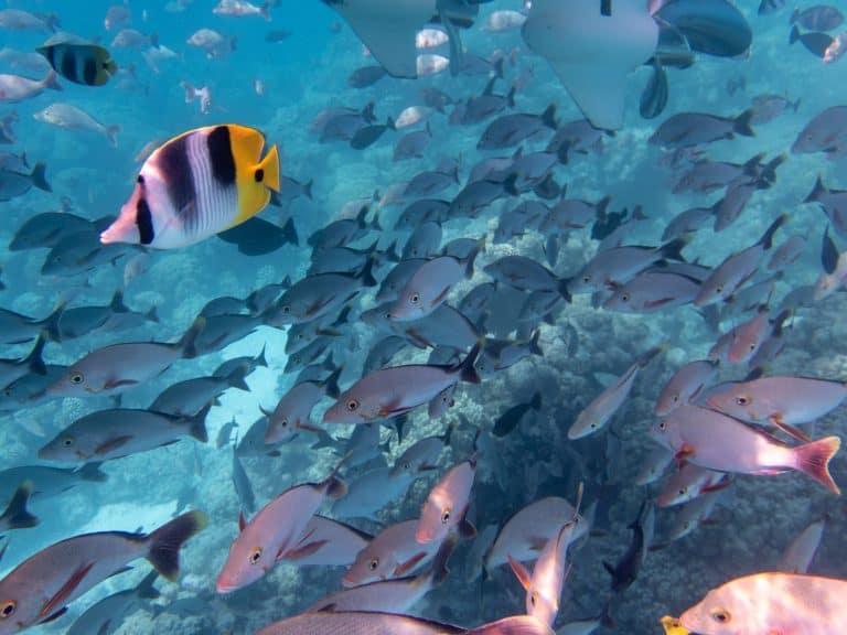Rangiroa, Tahiti marine life
