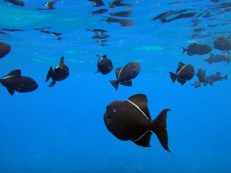 Molikini Crater fish