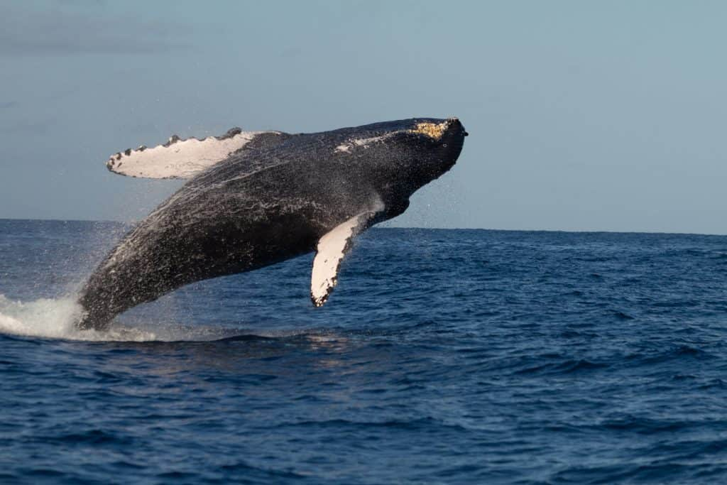 Things to do in Maui Whale Watching