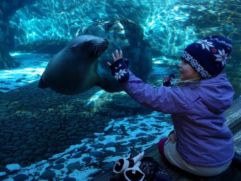 The St. Louis Zoo is a kid-friendly favorite
