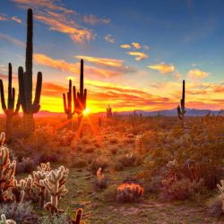 The Absolute 10 Best Things to do in Arizona with Kids