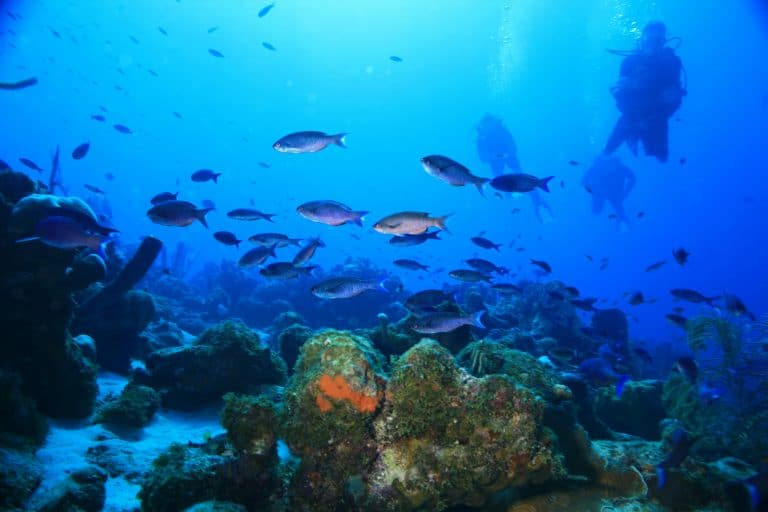 Go Scuba diving while in Jamaica