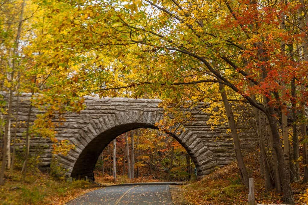 acadia fall photo