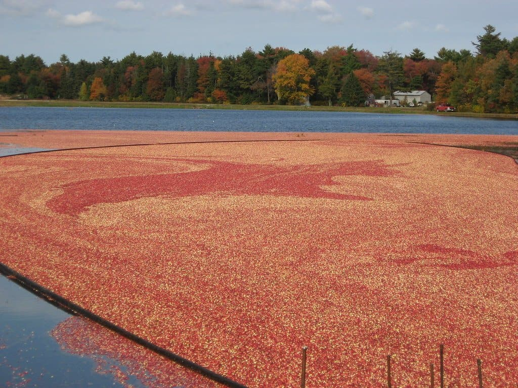 New England Fall Foliage Drive in Massachusetts cranberry bog country.