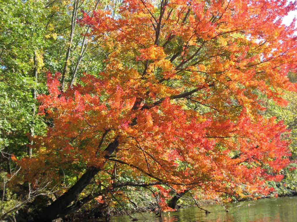 Blackstone river fall photo